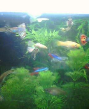 fisheswaterplant